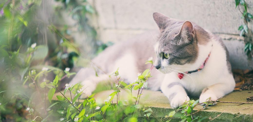 女性カメラマンRyokoのブログ